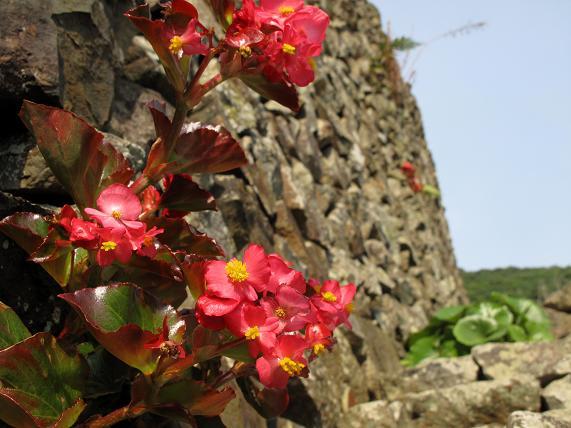 9花のある風景.JPG