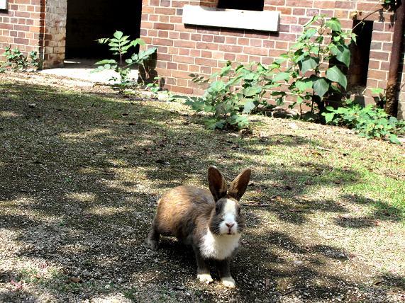 いつでもどこでもウサギがいます.JPG