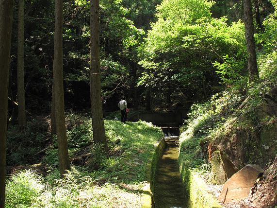 こんな森の中で遊んでいます.JPG